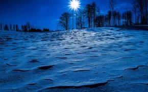 zima, noc, księżyc, Obecny, drzew, krajobraz