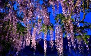 ночь, дерево, ветки, цветы