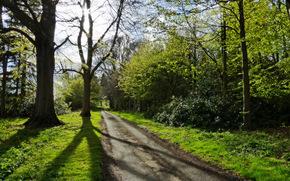 las, drzew, droga, krajobraz