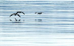 Vögel, Flucht, Wasser, Tiere