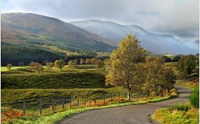 Montagne, stradale, campo, alberi, paesaggio