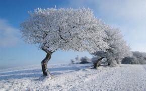 inverno, campo, stradale, alberi, paesaggio