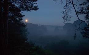 forest, twilight, grass, night, summer, nature, space, landscape