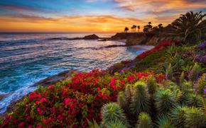 pôr do sol, mar, lagoa, praia, costa, plantas, Flores, paisagem