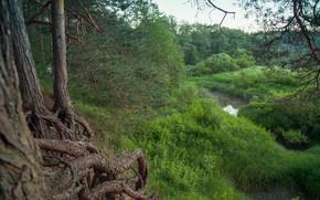 Лес, река, Орша, деревья, корни, кусты, палатка, природа, пейзаж