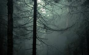 forest, sliver, SPRING, May, haze, fog, BRANCH, nature