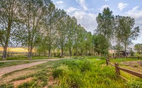 stradale, alberi, campo, Zobor, paesaggio