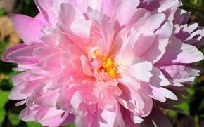 flower, nature, Macro