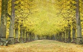 осень, аллея, деревья, пейзаж