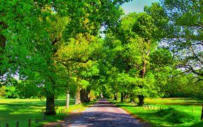 道路, 树, 景观