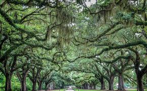 droga, drzew, krajobraz
