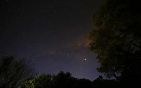 Млечный Путь, ночь, звезды, небо, деревья, природа, космос