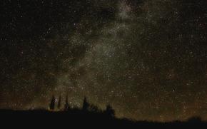 Via Lattea, notte, Stella, cielo, alberi, natura, spazio