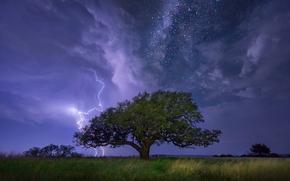 Дерево, гроза, молния, Млечный Путь, звёзды, небо, тучи, трава, кусты