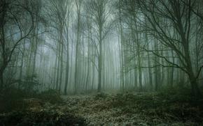 foresta, natura, buio, alberi