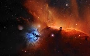 nebula, Horsehead, space, Star
