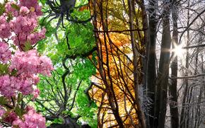 Season 4, collage, nature, four seasons