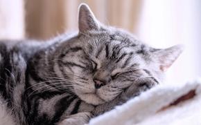 сон, отдых, кот, спящий кот