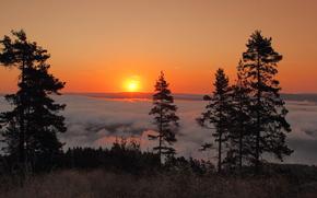 Sunne, Sweden, Sweden, DAWN, rise, morning, fog, trees