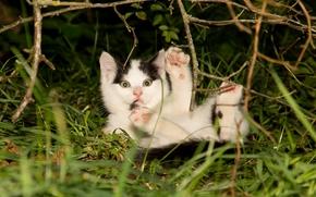 gattino, bambino, piede, FILIALE, erba