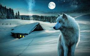 hiver, lune, maison, loup, arbres, nature