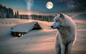 inverno, luna, domestico, lupo, alberi, natura