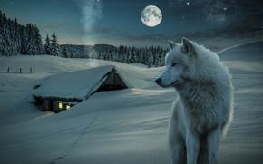 3d, petite maison, neige, Loup, lune, nuit