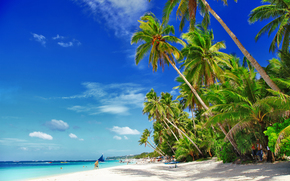 palme, Costa, spiaggia, barche, Maldive