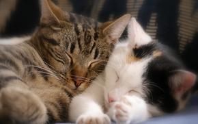sonho, casal, Gatinhos, gatinhos dormindo