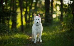 cane, visualizzare, foresta