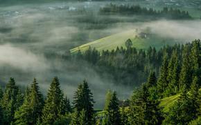 Ellmau, Tirol, Austria, Alps, Ellmau, Tyrol, Austria, Alps, morning, fog, trees
