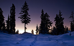 inverno, tramonto, alberi, nevicata, tracce, paesaggio