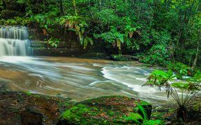 cascata, foresta, alberi, natura, panorama