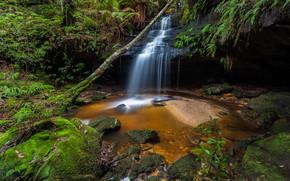 cascada, bosque, árboles, Rocas, naturaleza
