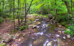 río, bosque, árboles, piedras, naturaleza