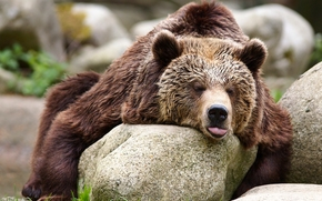 bear, Bruin, Relax, stones