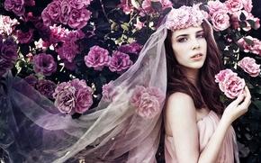 Rebekah Van Zant, bride, veil, Roses, Flowers, rose bush, bush, mood. style