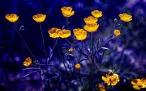 Fiori, flora, Macro