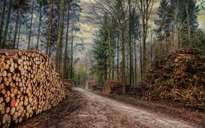 bosque, árboles, carretera, leña, paisaje