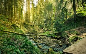 лес, деревья, речка, природа