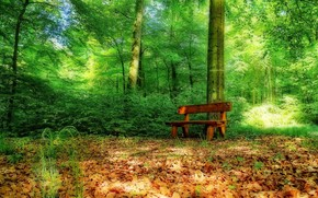 forest, trees, A bench, nature