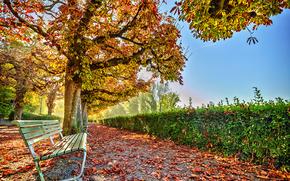 autumn, park, trees, road, A bench, landscape