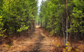 forest, trees, footpath, nature