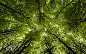 Wald, Bäume, Krone, Natur