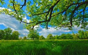 夏天, 草地, 树, 分行, 草
