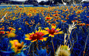 campo, Flores, Macro