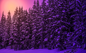 sunset, forest, trees, nature, winter