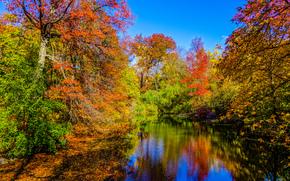 осень, водоём, деревья, пейзаж