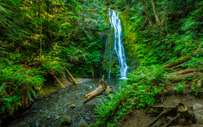 waterfall, forest, trees, nature