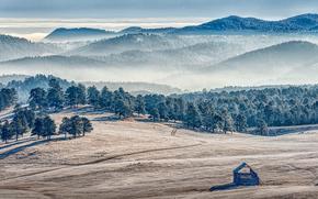 pole, Góry, drzew, mgła, krajobraz